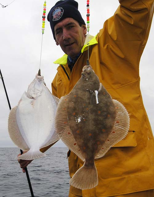 Double Plaice