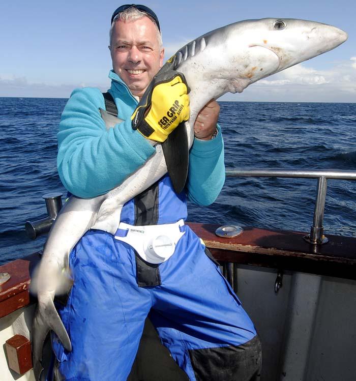 Blue Shark 1