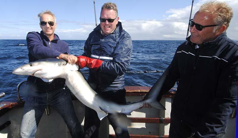 Blue Shark 2