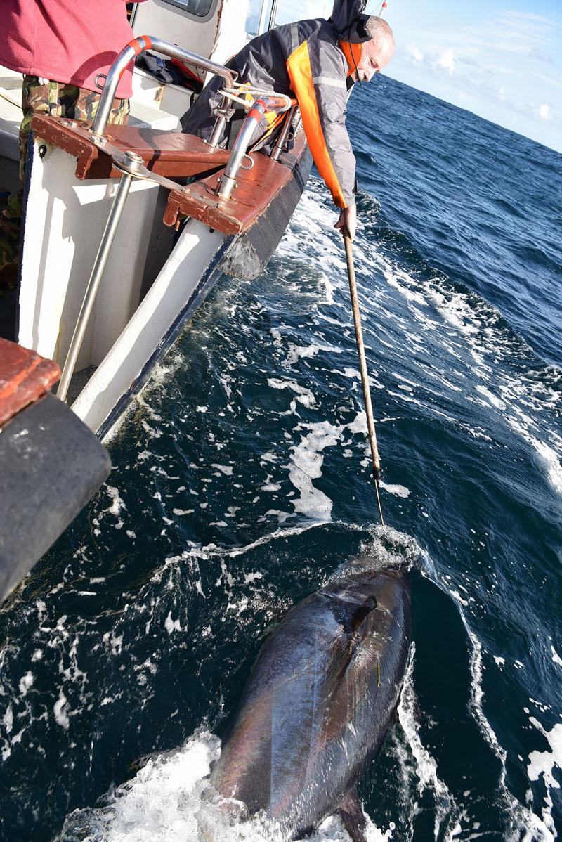 Mark - Bluefin